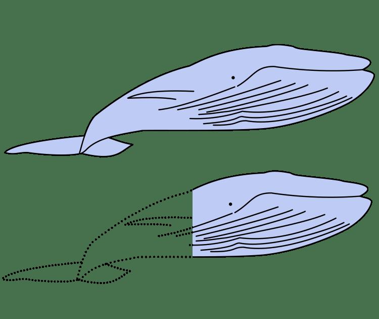 シロナガスクジラ約1.5頭分